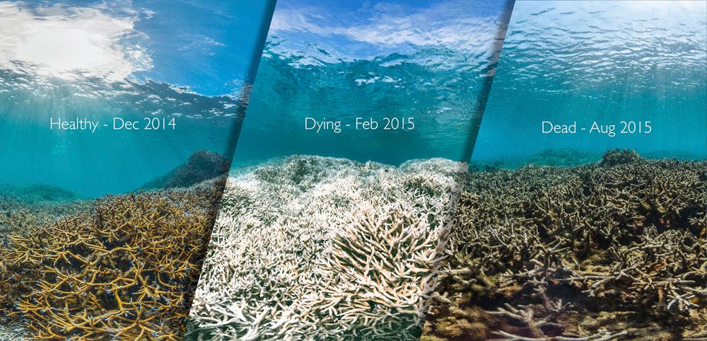 Before and after picture of reef bleaching in American Samoa Island